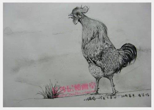 公鸡速写(上图)