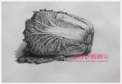 白菜素描(上图)