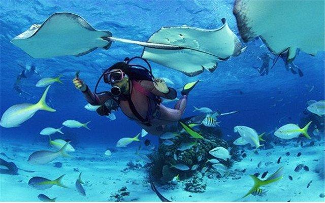 壁纸 海底 海底世界 海洋馆 水族馆 桌面 640_400