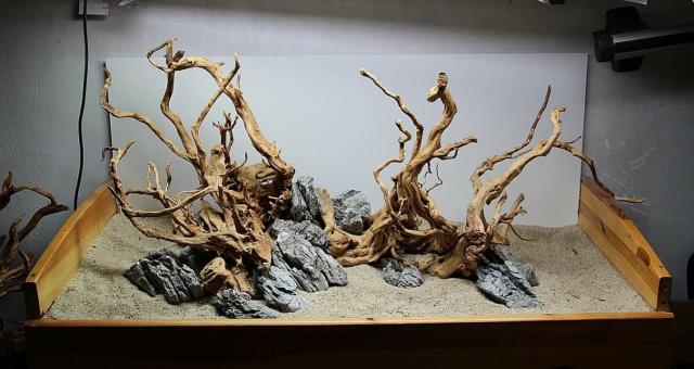 沉木骨架欣赏