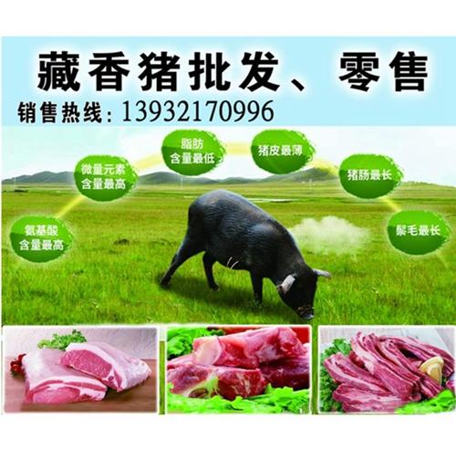 虎岳山庄诚信原生态藏香猪养殖基地